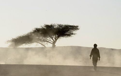 Sahrawi men walk in the desert after a c